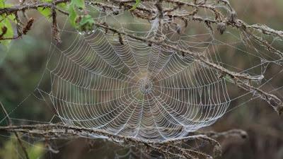 Cobweb attacks